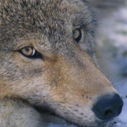 The National Wolfwatcher Coalition is suing Wisconsin's Department of Natural Resources.